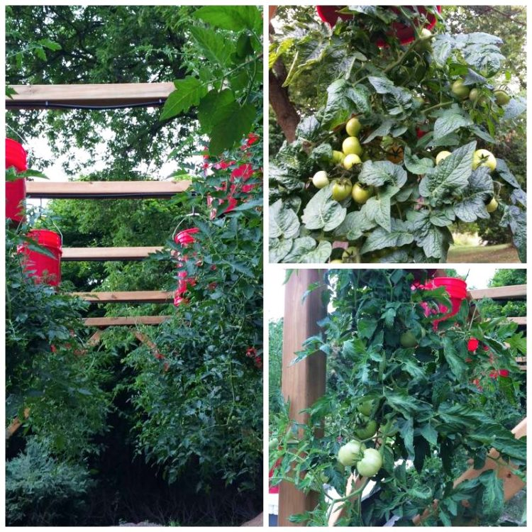 Hanging Garden of My Dreams